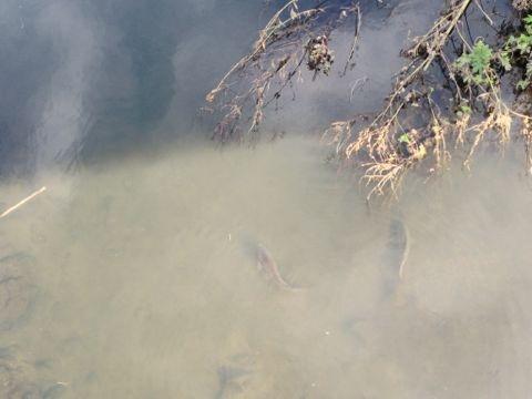 f:id:romechan:20121014120030j:image