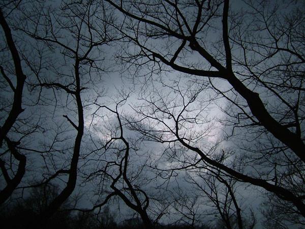 f:id:ronri:20101125120624j:image