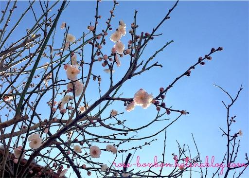 f:id:rose-bonbon:20190227091309j:image