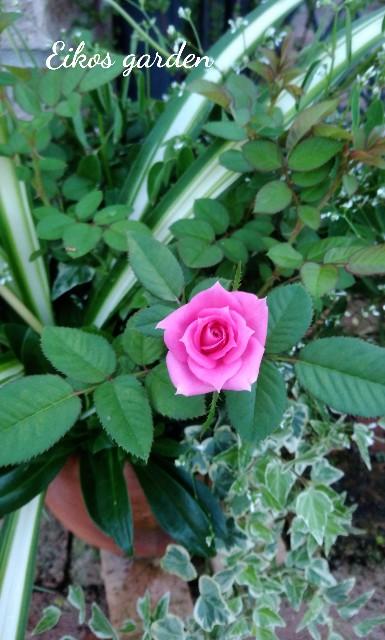 f:id:rose-eiko:20210801193756j:image