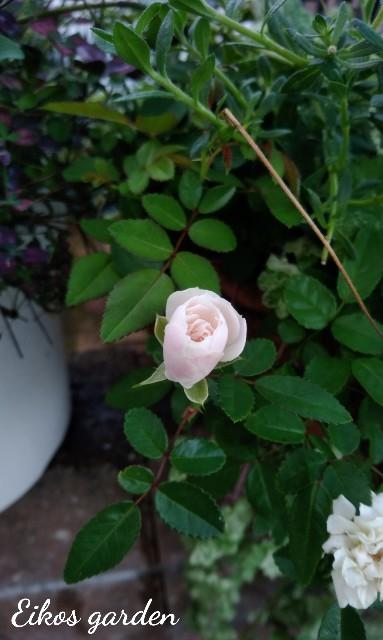 f:id:rose-eiko:20210915210317j:image