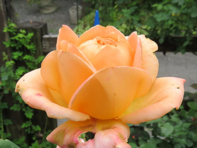 f:id:rose_in_makino:20140713103725j:image:w640