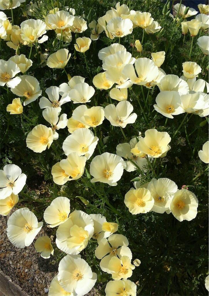f:id:roseflower:20170722235357j:image