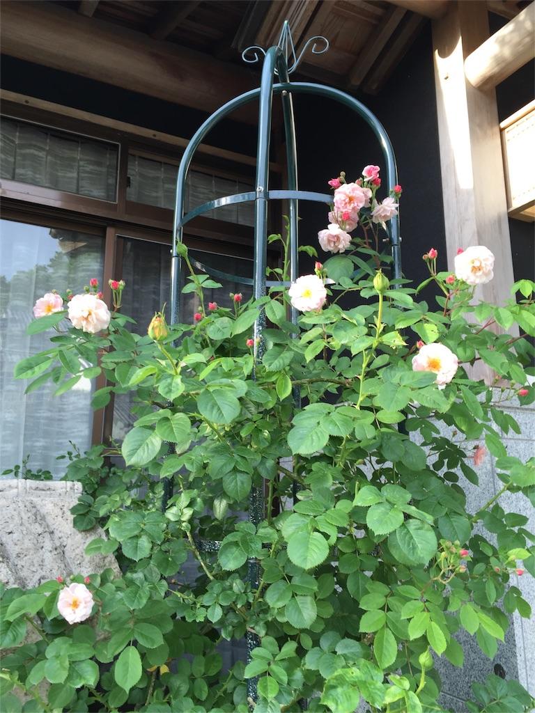 f:id:rosegarden2017:20170516221318j:image