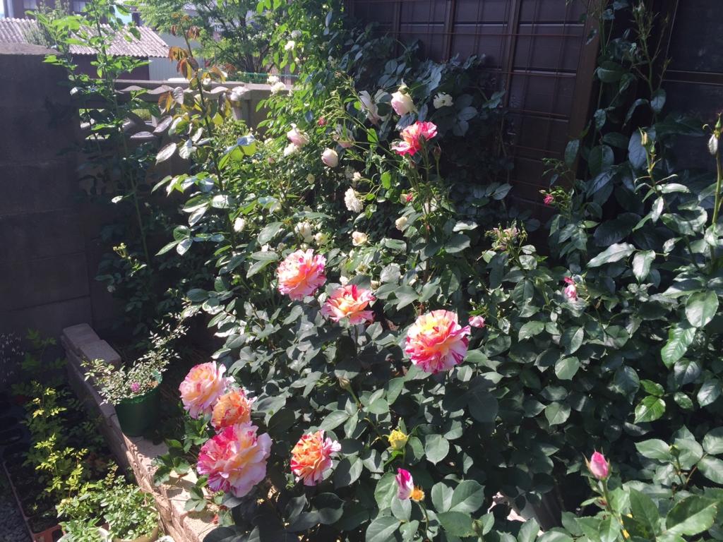 f:id:rosegarden2017:20170520205021j:plain