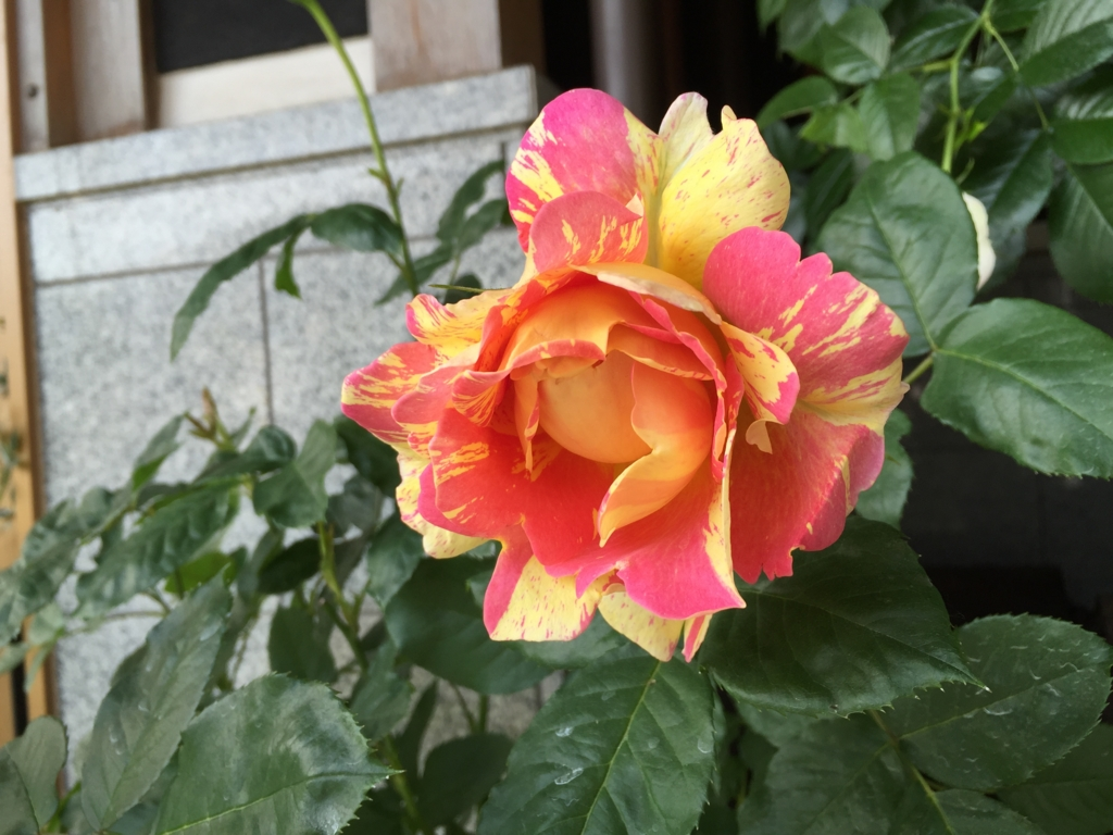 f:id:rosegarden2017:20170522211027j:plain