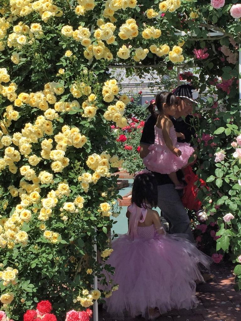 f:id:rosegarden2017:20170611122128j:plain
