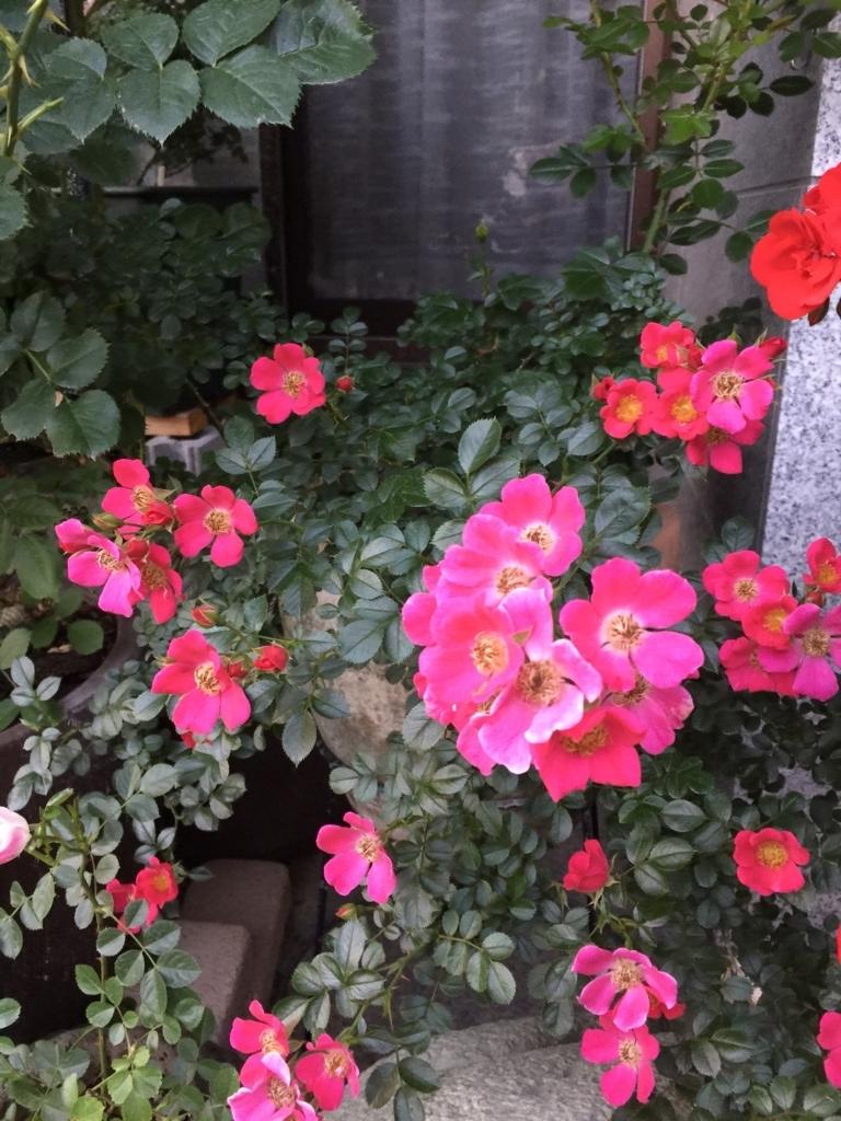 f:id:rosegarden2017:20170611123810j:plain
