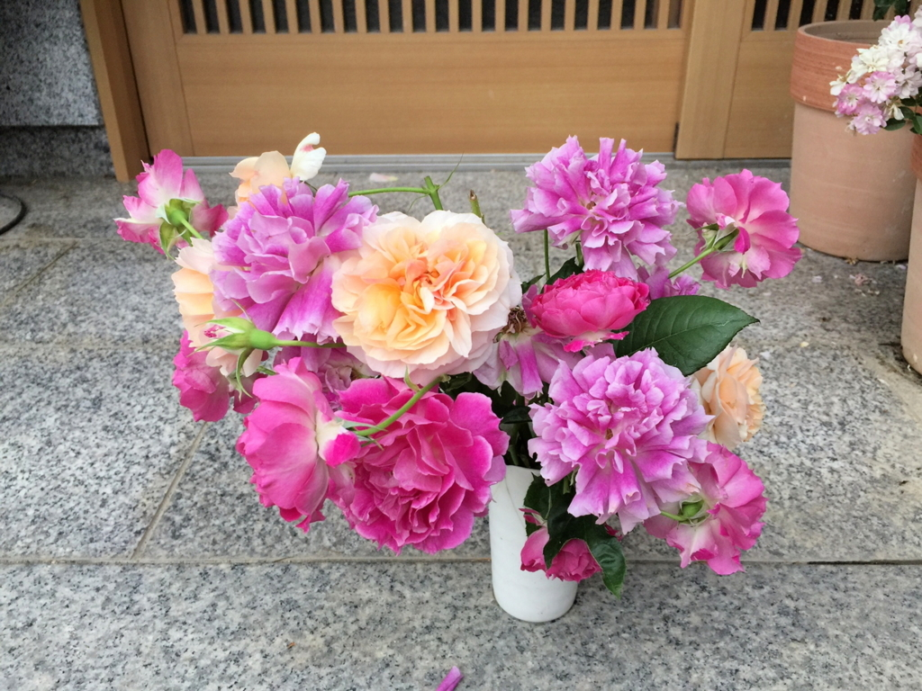 f:id:rosegarden2017:20170611124034j:plain