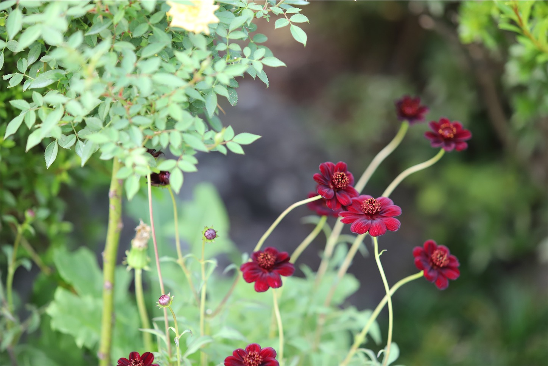 f:id:rosegarden2017:20190928161745j:image