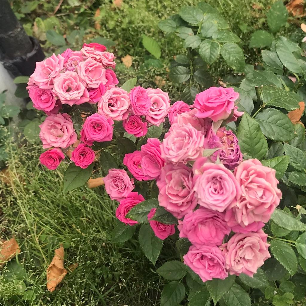 f:id:rosepetall:20190610000111j:image