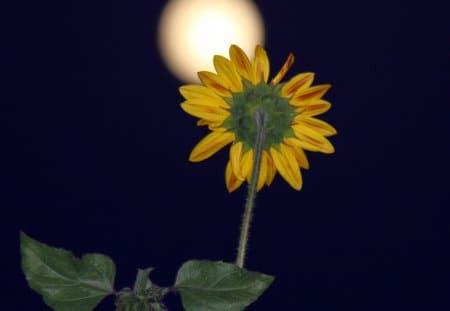 2020年8月4日水瓶座満月