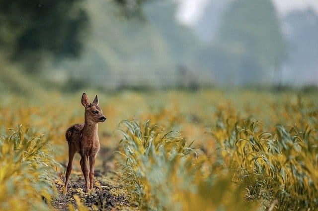 野生の勘や危険回避能力