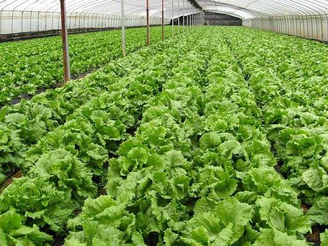 オーガニック野菜・有機野菜