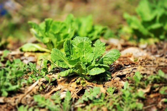無農薬野菜・自然農法
