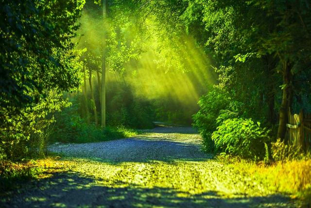 緑のある風景