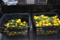 花柚子 収穫