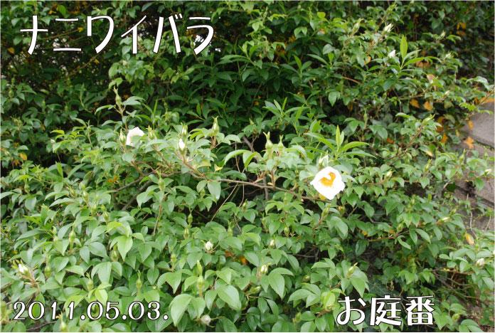 f:id:rotling:20110503095404j:image
