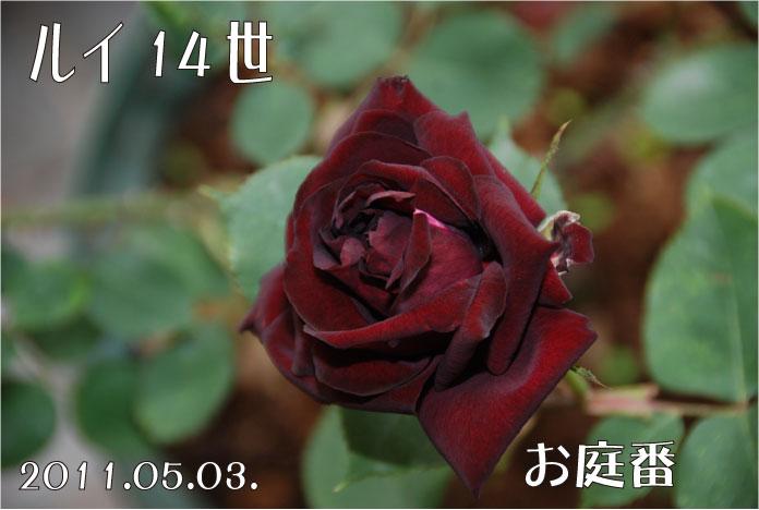 f:id:rotling:20110503095407j:image