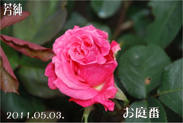 f:id:rotling:20110503105716j:image