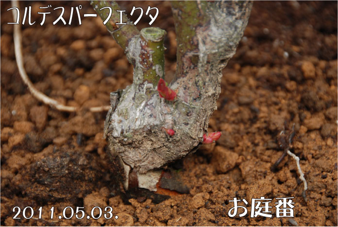 f:id:rotling:20110503105728j:image