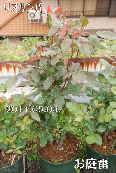 f:id:rotling:20110503105731j:image