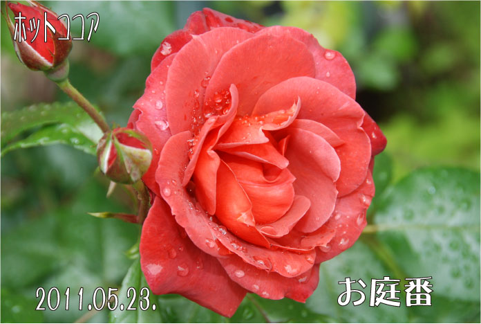 f:id:rotling:20110523131144j:image