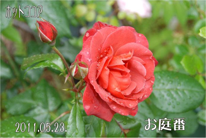 f:id:rotling:20110523131145j:image