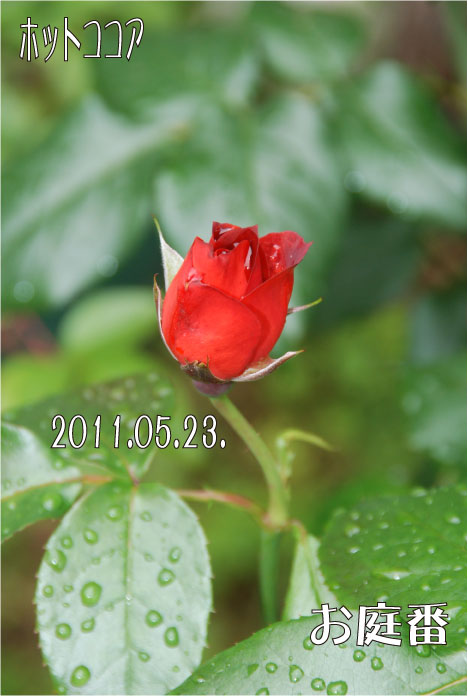 f:id:rotling:20110523131146j:image