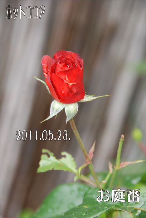 f:id:rotling:20110523131147j:image