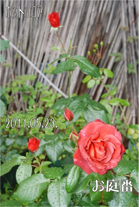 f:id:rotling:20110523131148j:image