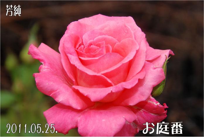 f:id:rotling:20110525172632j:image