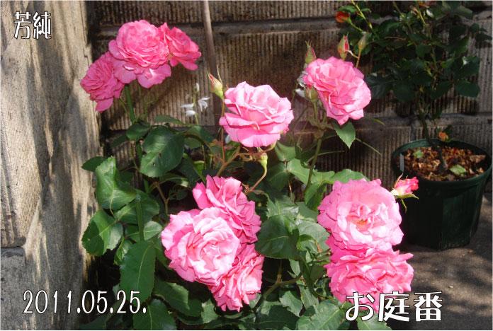f:id:rotling:20110525172635j:image