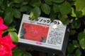 京成バラ園2013春 ダブルノックアウト