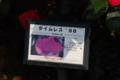 タイムレス98 京成バラ園
