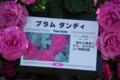プラムダンディ 京成バラ園 2013/05/16