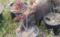 イノシシ被害2016