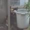 猫 水飲み バケツ