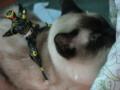 [猫][ぬこ][S.H. フィギュアーツ][S.H. Figuarts]