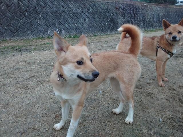 大阪の老犬ホーム