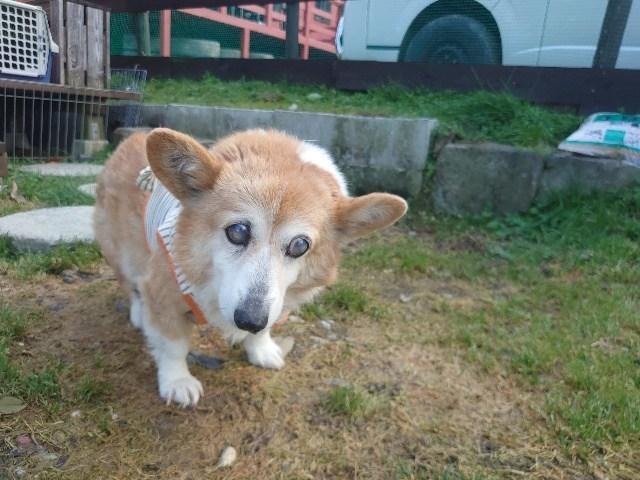 老犬ホーム大阪