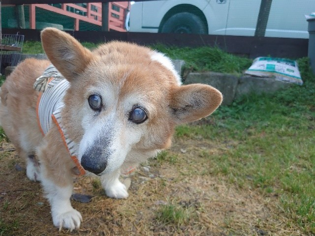 大阪最大の老犬ホーム