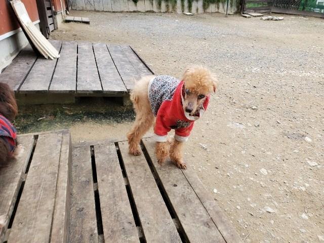 京都の老犬ホーム