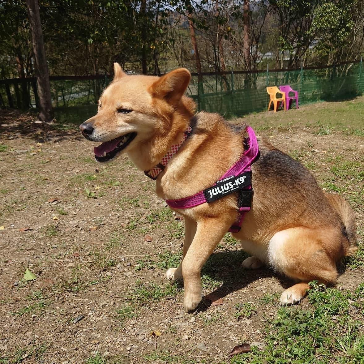 京丹波町老犬ホームあん