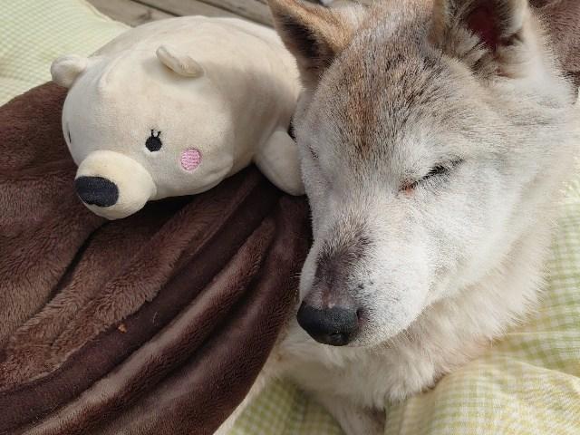 大阪老犬ホーム