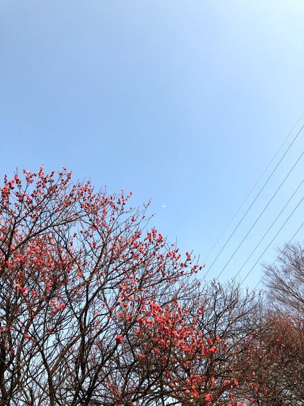 f:id:route66-jp:20180226083106p:plain