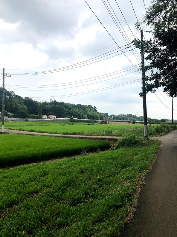 f:id:route66-jp:20200724214622p:plain