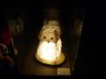 全国光とあかり祭りin奈良13