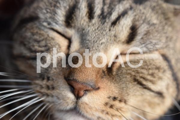 初日に2回ダウンロードされた猫の写真