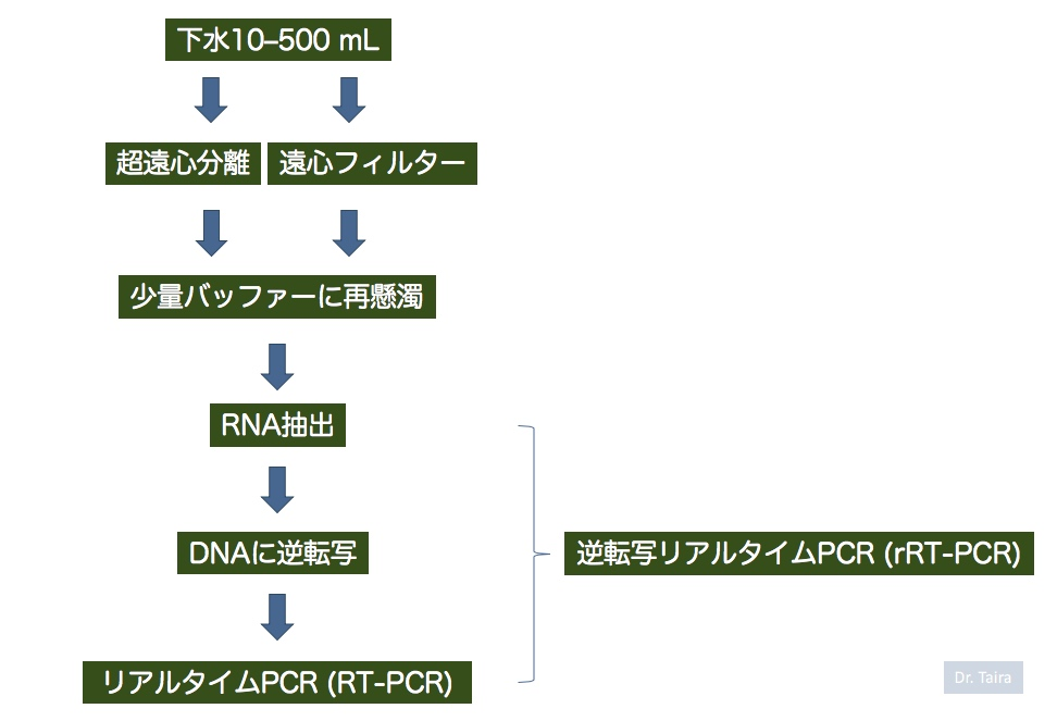 f:id:rplroseus:20200530224619j:plain